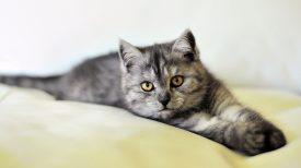 cat-3431537_1920